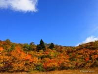09kurikoma_koyo_aozora1.jpgのサムネール画像